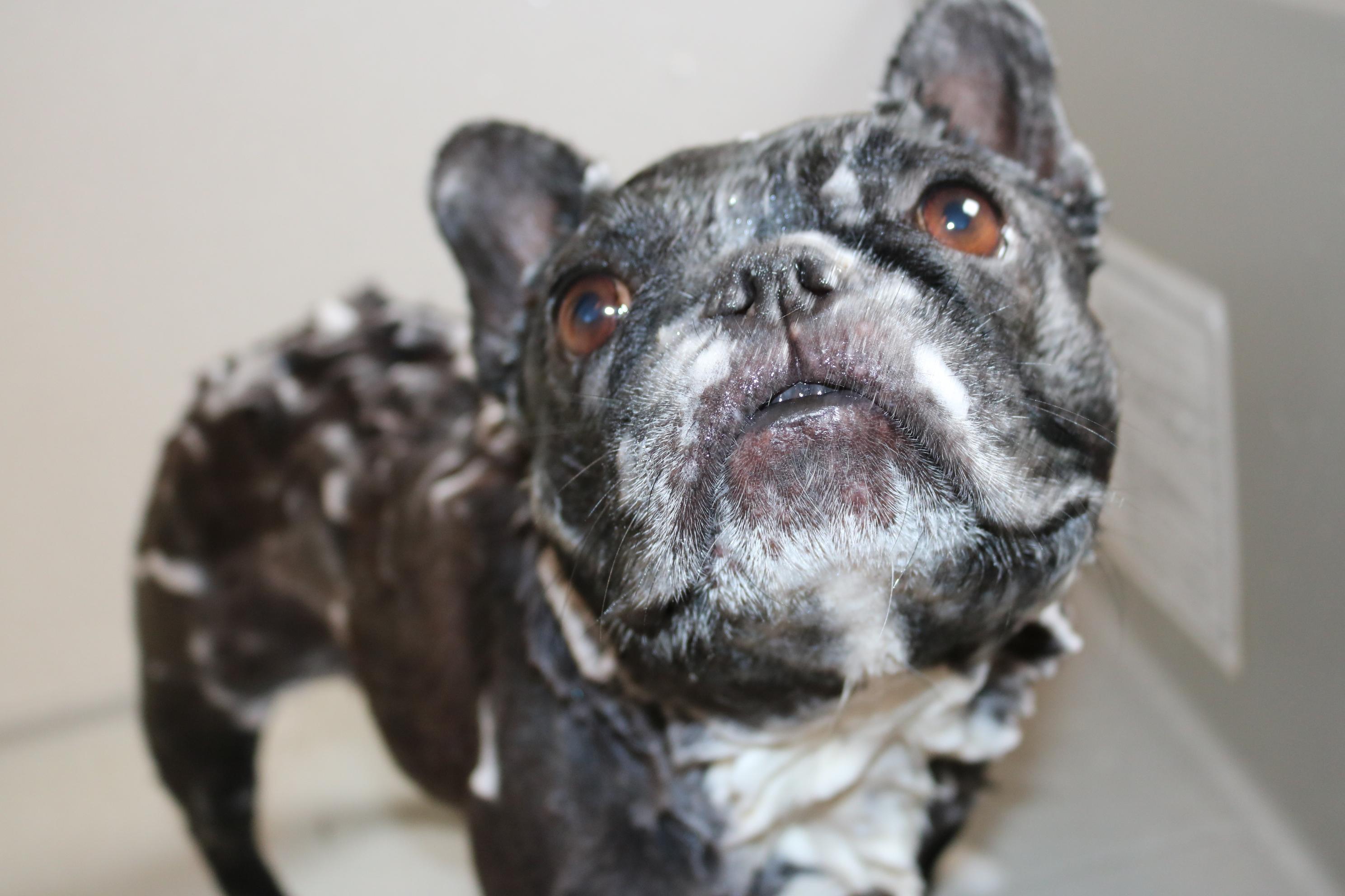 1dayレッスン・愛犬のための石けん